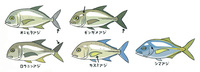 fishwatching_12_02.jpg